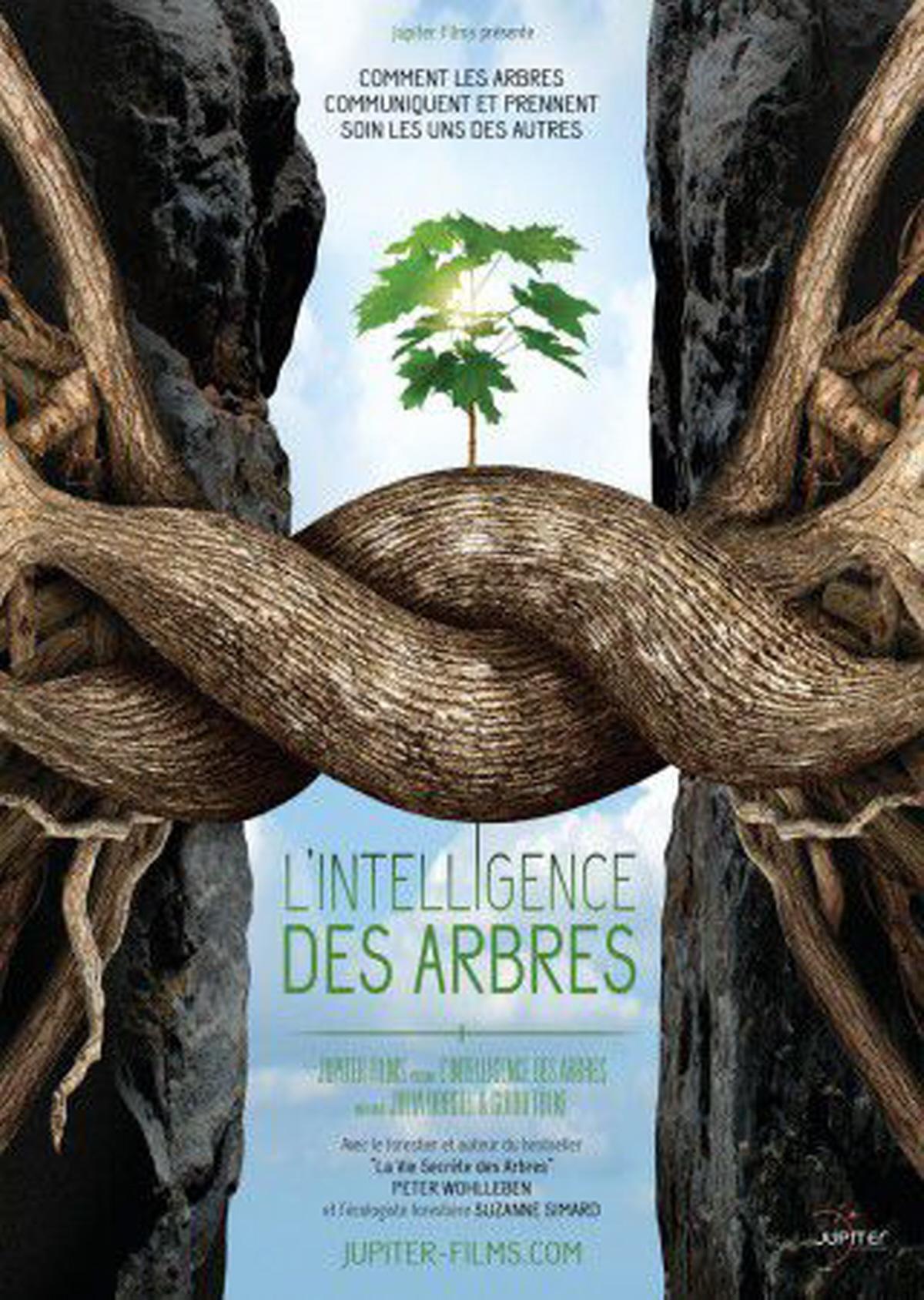 L'intelligence-des-arbres